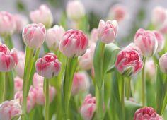 fotobehang bloemen - Google zoeken