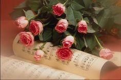 lijepe ruže - Google pretraživanje