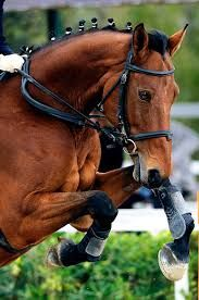Image result for photography horse showjumping