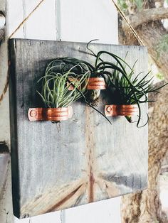 Tree of Life Modern Farmhouse Gray Barn Wood Stained Wooden Plaque with 3 Copper Holders and 3 Air Plants. 7 inches X 7 inches The Perfect Gift! All pieces are created based on the natural design of each individual piece of wood You will receive the one-of-a-kind wooden plaque shown