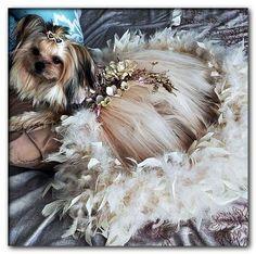 large dog wedding dress Dog Wedding Attire, Dog Wedding Dress, Wedding Dresses, Sleeping Beauty Costume, Dog Tuxedo, Dog Clothes Patterns, Pet Fashion, Pet Costumes, Pet Clothes