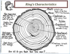 biology girl Characteristics of Trees Rings Tree Study, Tree Identification, Tree Rings, Plant Science, Science Nature, Outdoor Learning, Forest School, Nature Journal, Nature Study
