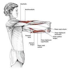 Fingers Down Forearm Stretch - Common Shoulder Stretching Exercises… Shoulder Stretching Exercises, Forearm Stretches, Fitness Workouts, Yoga Fitness, Health Fitness, Forearm Workout At Home, Yoga Muscles, Yoga Pilates, Frozen Shoulder