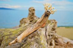 Artist Turns Driftwood Into Striking Sculptures That Capture The Beauty Of Nature