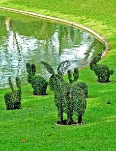Topiary Easter bunnies