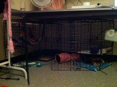 Cube cages | The Holistic Ferret Forum