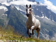 Is it my imagination, or is this a model horse posed on a mountain side? Beautiful just the same!