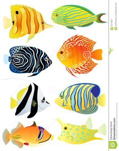 Collection Of Tropical Fish - Download From Over 67 Million High Quality Stock Photos, Images, Vectors. Sign up for FREE today. Image: 20715937