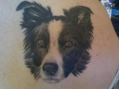 Border collie. Tattoo