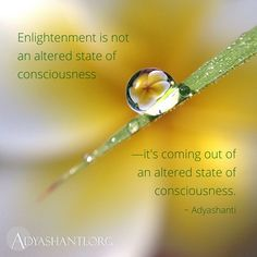 Enlightenment is not an altered state of consciousness -- it's coming out of an altered state of consciousness.