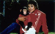 Bubbles, le singe de Michael Jackson