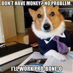 Dog Lawyer