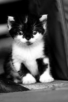 I just want to kiss that cute little face!