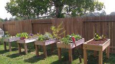 Hochbeete mit Gewürzen und kleinen Gemüsen im Garten platziert
