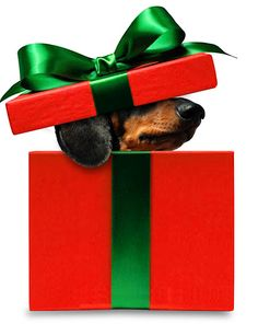 All I want for Christmas is a doxie. ღ