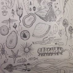 Little things around.  Sketchbook studies. Illustration by Svabhu Kohli.