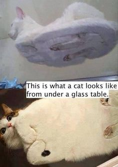 This Is What A Cat Looks Like From Under A Glass Table. I just laughed hysterically at this xD