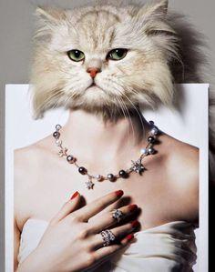 """My Kitty Loves Diamonds"" Vogue Japan Wedding Supplement Spring/Summer 2014"