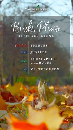 Diffuser Blends There's nothing like taking a walk in the crisp, autumnal air while breathing in the Fall Essential Oils, Essential Oil Diffuser Blends, Essential Oil Uses, Young Living Essential Oils, Young Living Diffuser, Young Living Oils, Diffuser Recipes, Wellness, Diffusers