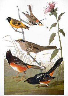 Canada Goose trillium parka sale price - 1000+ images about Audubon John James on Pinterest   John James ...