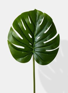 Our monstera leaf has a beautiful shape and size making it great for outdoor weddings or festive fiestas. Silk Plants, Faux Plants, Botanical Art, Botanical Illustration, Leaves Wallpaper Iphone, Leaf Photography, Leaf Texture, Graphic Wallpaper, Plant Pictures