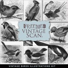 Vintage Birds Illustrations