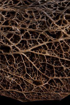 Prickly Pear Cactus skeleton | Jessica Rosenkrantz | Flickr Natural Shapes, Natural Texture, Patterns In Nature, Textures Patterns, Macro Pictures, Organic Structure, Prickly Pear Cactus, Leaf Texture, Colorful Trees