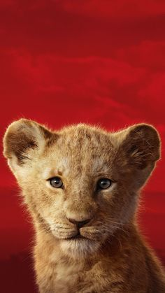 Animal Wallpaper - Hello my page 3d Wallpaper Lion, Wallpaper Animes, Lion Wallpaper, Disney Phone Wallpaper, Animal Wallpaper, Lion King Poster, Lion King 1, Lion King Movie, Simba Disney