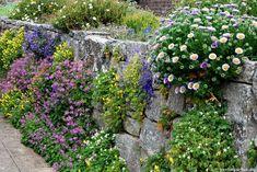 Wisley Garden: bepflanzte Mauer