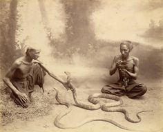 Photograph of two snake charmers with hamadryads (King Cobras) in Burma (Myanmar), from the Curzon Collection.  Photo by Watts and Skeen, 1895