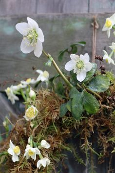 Learn how to create a January moss wreath with seasonal winter flowers // Flowers by Lock Cottage Flowers // The Natural Wedding Company Moss Wreath, Winter Wedding Flowers, Wedding Company, Seasonal Flowers, Door Wreaths, January, Cottage, Seasons, Create