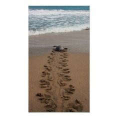>>>best recommended          	Hawksbill Turtle Trek print           	Hawksbill Turtle Trek print lowest price for you. In addition you can compare price with another store and read helpful reviews. BuyShopping          	Hawksbill Turtle Trek print Online Secure Check out Quick and Easy...Cleck Hot Deals >>> http://www.zazzle.com/hawksbill_turtle_trek_print-228092409578808110?rf=238627982471231924&zbar=1&tc=terrest