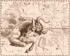 Reading my horoscope. I am 100% true to my Taurus sign