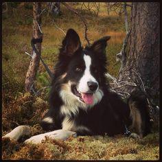 Havskumteppe | Trine's blog Corgi, Blog, Animals, Corgis, Animales, Animaux, Blogging, Animal, Animais