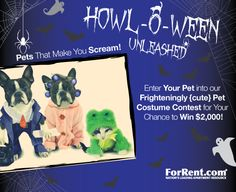Win 2 thousand bucks or 500 dollar gift card by uploading a photo of your pet in costume to ForRent.com's FB page. Easy! And sooo cute! Ends Nov. 4