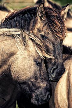 The Brotherhood of Horses
