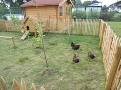 kippenren - Google zoeken Chicken Home, Chicken Runs, Dog Enclosures, Garden Animals, Farms Living, Down On The Farm, Go Outside, Farm Life, Garden Inspiration