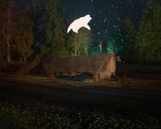 Nature vs Post Truth Era - Shoot Animal Photography by Montreal, Quebec, Canada based photographer Benoit Paillé. Have a look of this collection of animal Nocturne, Flash Photography, Animal Photography, National Geographic Channel, Ghost Cat, Benoit, Montage Photo, The Real World, Photomontage