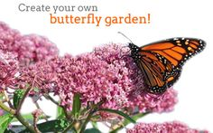 Flight of the Butterflies in 3D Home Page