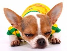 All American Pet Photo Day encourages pet owners to share their beloved pet photos on July Say cheese and get your camera ready! Puppy Stages, National Day Calendar, Chihuahua Love, Pet Safe, Dog Owners, Animal Photography, More Fun, Cute Pictures, French Bulldog