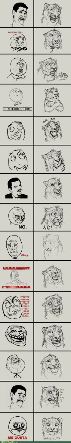 I think I would like memes better with lions! Haha!
