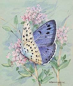 Butterfly art.  Really a pretty picture!!