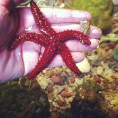 estrelas na mao. oceanario de aracaju, sergipe, brasil