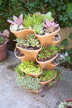 This planter is a fun way to collect a lot of succulent varieties in a small space.