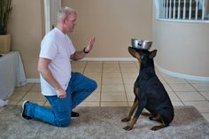 Dobermans are incredibly trainable dogs and there are some very fun tricks that they can learn. Here are 13 easy tricks that any Doberman can quickly learn. Doberman Training, Training Your Dog, Smartest Dog Breeds, Doberman Love, Dog Pee, Black Lab Puppies, Corgi Puppies, Dog Information, Dog Grooming Business