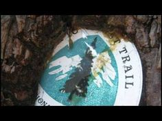 Wild by Cheryl Strayed Book Trailer