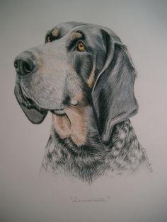 Lesley Zoromski dog portraits. Simply amazing! Annabelle the Coonhound.
