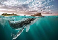 Digital Art Vision of Ecuador. Ecuador is art, culture, love, Man! Ecuador is amazing. Wale, Galapagos Islands, Poster Pictures, Foto Art, Insta Photo, Photo Manipulation, Underwater, Digital Art, Creatures