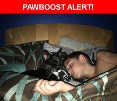 Please spread the word! Jerry was last seen in Port St. Lucie, FL 34953.    Nearest Address: Near SW Parsons St & SW Alcantarra Blvd
