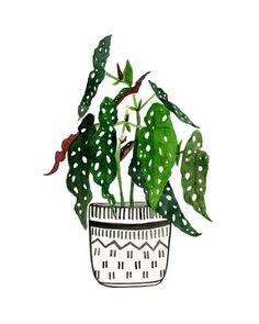 "Two Print Set: ""Begonia Maculata"" & ""Calathea Ornata"" Archival Prints by Lindsay Gardner Plant Painting, Plant Art, Begonia Maculata, Flow Magazine, Calendar Pictures, Guache, Plant Illustration, Photoshop, Creative Art"